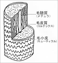 ヒゲの構造